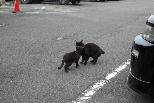 Today's Cat@2010-03-15