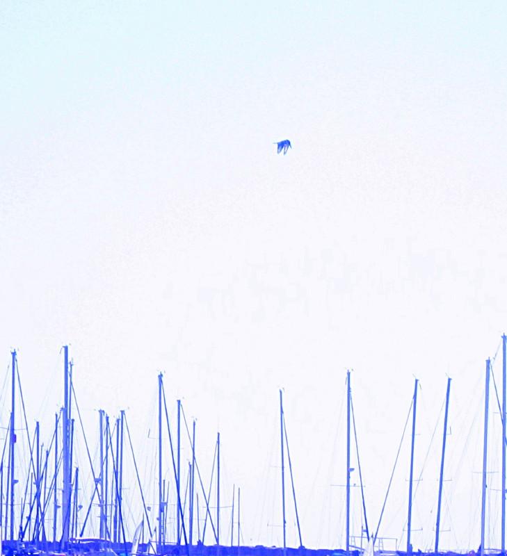 20-3-2010-piedkingfisher