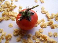 Solanum quitoense - Naranjilla (YAZMDG (15,000 images)) Tags: fruit nsw solanum hinterland naranjilla rainbowregion goonengerry floraofaustralia nswrfp arffs yazminamicheledegaye northernriversspecies quintoense