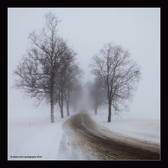 March in Norway (stella-mia) Tags: white mist norway misty fog landscape march spring image foggy explore birch frontpage betula bjrk whitebirch 2470mm ringsaker explored theunforgettablepictures artofimages 5dmkii bestcapturesaoi elitegalleryaoi veslelien mistyimage annakrmcke