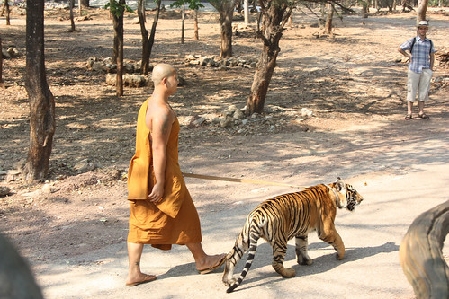 Taking the tiger for a walk