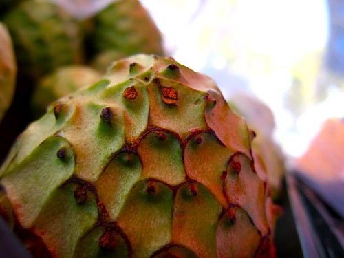 Cherimoya at Santa Monica Farmers Market