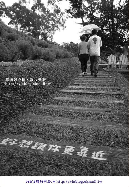 【苗栗明德水庫】漫遊薰衣草森林明德店~環境篇17
