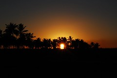 pr do Sol (NatliaLemos) Tags: prdosol pernambuco coqueiros