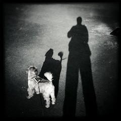 "52 Weeks Project (47): ""Put a Dog in Your Life"" (Sion Fullana) Tags: people urban blackandwhite espaa selfportrait painterly blancoynegro me myself square spain creative squareformat mallorca palma allrightsreserved majorca week47 iphone 500x500 shadowandlight urbanshots fortheloveofdogs brusselsgryphon 52weeksproject iphonephotography iphoneshots sionfullana grifndebruselas iphoneography iphoneographer sionfullana editedanduploadedoniphone hipstamatic hipstamaticapp johnslensblackeyssupergrainfilm ifyoulovedogs putadoginyourlife meandnano nanothedog throughthelensofaniphone"