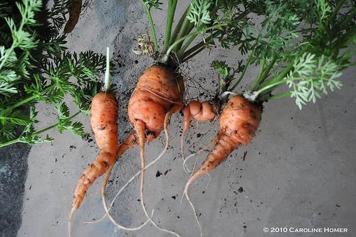 Oddball carrots