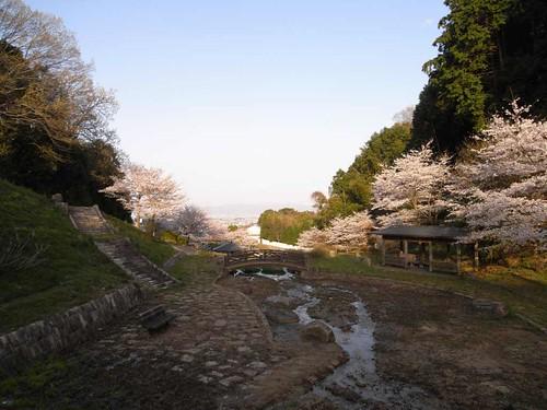 <桜>当麻寺奥の公園-04