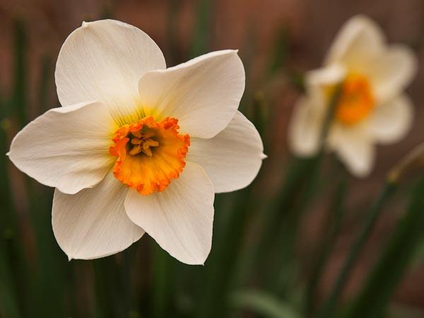 Ahhh...Spring Flowers