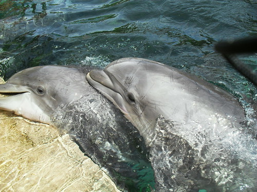 sea world 120