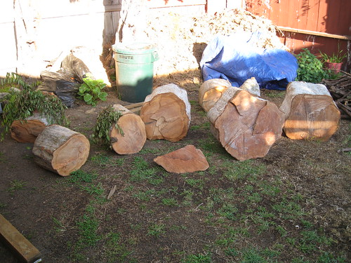 Chinese elm logs waiting to be cut up in back yard