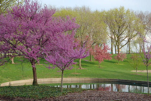 Trees in the bloom, at the Gateway Arch, in Saint Louis, Missouri, USA