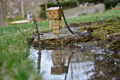 Reflection (mofya.sinjela) Tags: wood wild reflection water look grass rock mirror amazon dof mud bokeh ripple wave mascot reflect stick wilderness mirroreffect danbo boxman mwinga boxvswild