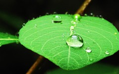 IMG_1328 Raindrops