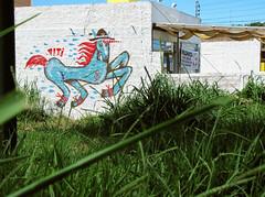 (viti works) Tags: horse arte florianopolis da lonely lagoa cavalo cavalinho magia viti conceiçao graffite unicornio grosman