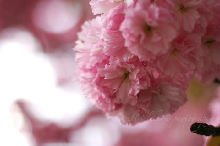 IMG_7965_cherry.jpg