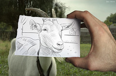 Pencil Vs Camera - 5 (Ben Heine) Tags: green nature animal countryside belgium time drawing 5 creative goat dessin series dimension campagne miseenabyme number5 nannygoat benheine braives drawingvsphotography 2dvs3d traditionalvsdigital pencilvscamera