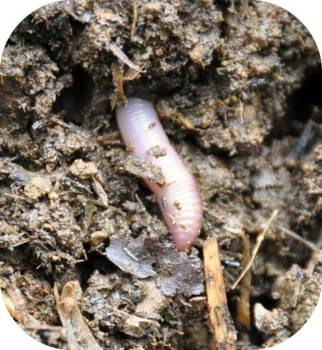digging manure