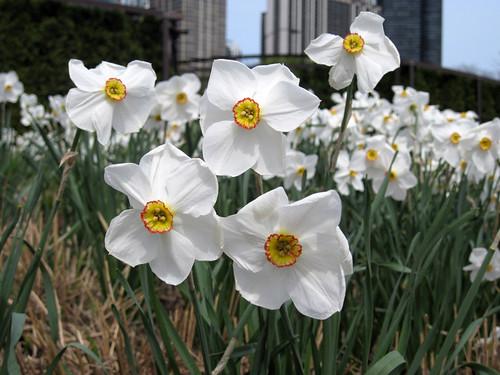 Millennium Park Spring 2010-3