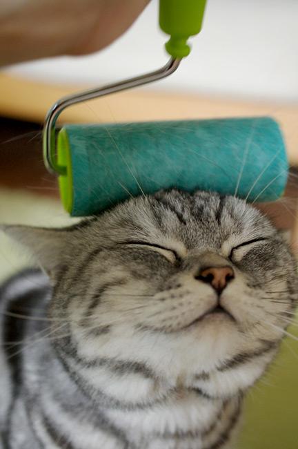 kittyroller