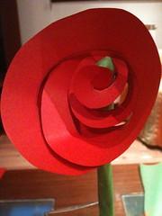 pp rosa