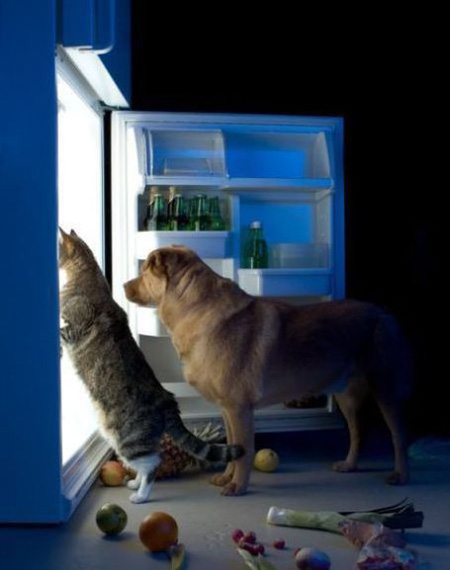 Dog and Cat raiding the fridge for snacks