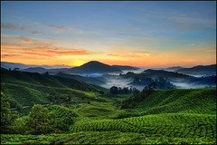 Cameron Highlands Sunrise (Souvik_Prometure) Tags: sunrise day tea kerala clear explore cameron malaysia kualalumpur tanahrata cameronhighlands frontpage ipoh pahang munnar brinchang teaestate photopoint cameronhighland sigma1020mm bohteaestate echopo
