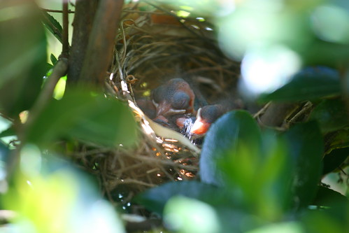 Babies in the nest