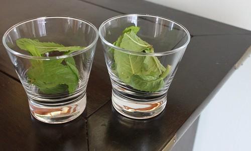 fresh homegrown mint for juleps