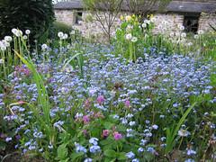 mare de myosotis (gaelle_kermen) Tags: jardin lumiere soir printemps pergola pissenlit myosotis