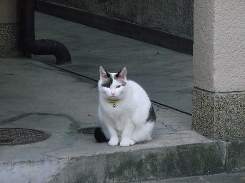 Today's Cat@2010-05-01