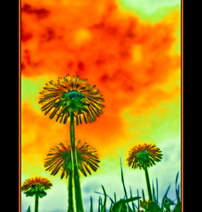 Dandelion art II (haikus*) Tags: awardtree