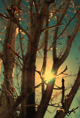 In the caves behind my house, I found a softer world. (Silent Ventriloquist) Tags: sky sun branches twigs