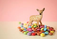 Sweet Deer ♥  EXPLORE