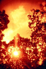 (Lvia Cristina) Tags: red sky orange sun tree folhas film sol silhouette yellow analog 35mm contraluz photography daylight holga laranja naturallight cu vermelho explore amarelo negative filme nophotoshop fotografia rvore galhos silhueta analgico lomografia vinheta redscale luznatural luzdodia lomographyfilm 135bc blackcorner escaladevermelho