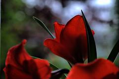 """""""mirando al futuro"""" (Tinta China2007) Tags: flores rojo felicidad mauro márcia esperanza horizonte juntos futuro tiempo amarilis"""