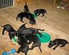 Hunde - 30 (Manfred Lentz) Tags: pets dogs puppy pups puppies hunde littledogs welpen hündchen babydogs whelps