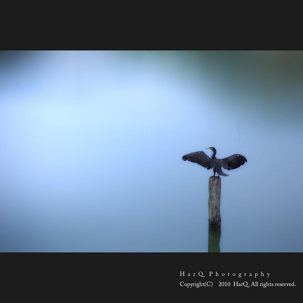 Bird *