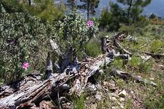 pin décomposé