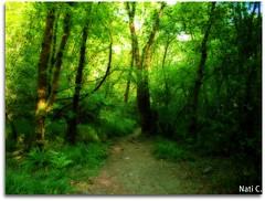 As Fragas do Eume en Orton (Nati C.) Tags: naturaleza rboles camino paisaje galicia sendero pontedeume cruzadas efectoorton asfragasdoeume