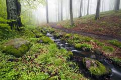 Coming Down the Hill (diesmali) Tags: wood trees mist fall water creek forest sweden sverige beech kullen kullaberg sigma1020mmf456exdchsm skna canoneos7d