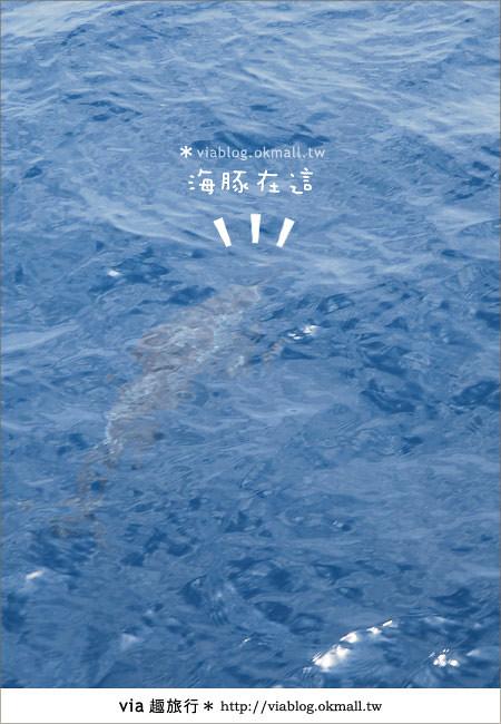 【花蓮賞鯨】花蓮玩樂趣~花蓮賞鯨之旅19