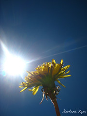 Pocketful of Sunshine (My Name In Stars) Tags: blue light sky plants sun green nature yellow petals dandelion flare sunflare sooc