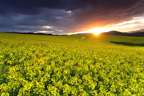 Storm Clouds Break Over The Golden Rape Field ~ Horehronie, Slovakia