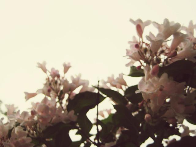 flowers + sky @capon