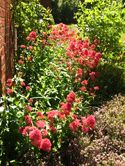 The Garden at Red House