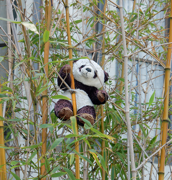 bear-in-bamboo.jpg