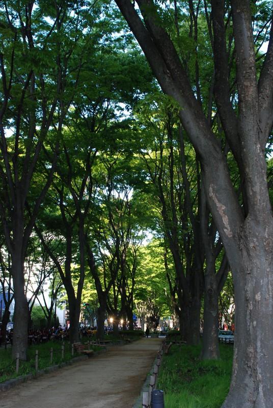 jozenjitrees
