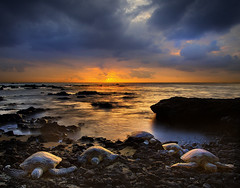 Hawaiian Turtle Sunset (kevin mcneal) Tags: ocean hawaii bravo searchthebest turtles tropical