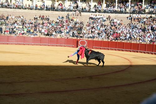 Dianas- Spain 2010 389