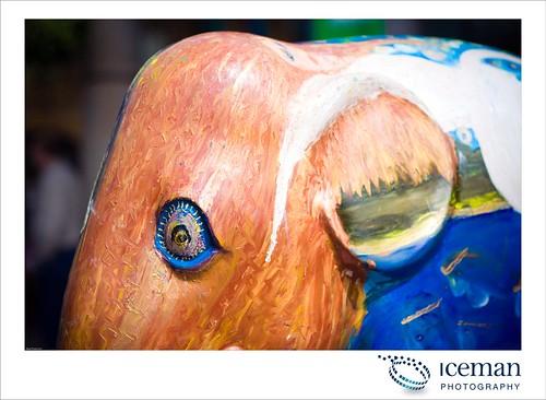 069-Clonakilty Irish Elephant